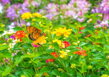 butterfly flower, butterfly with flowers images, flowers with butterfly