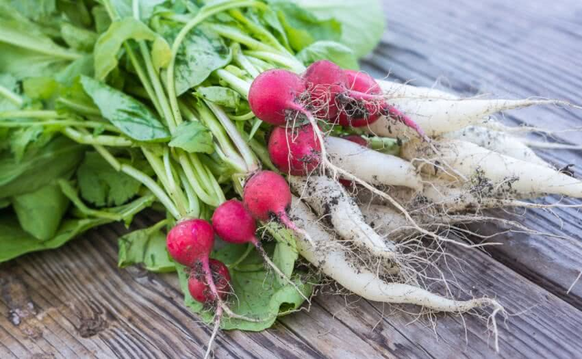 radishes, radish benefits , radish seeds