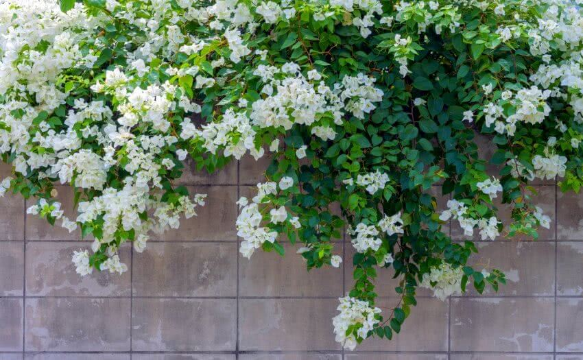climbing plants with flowers
