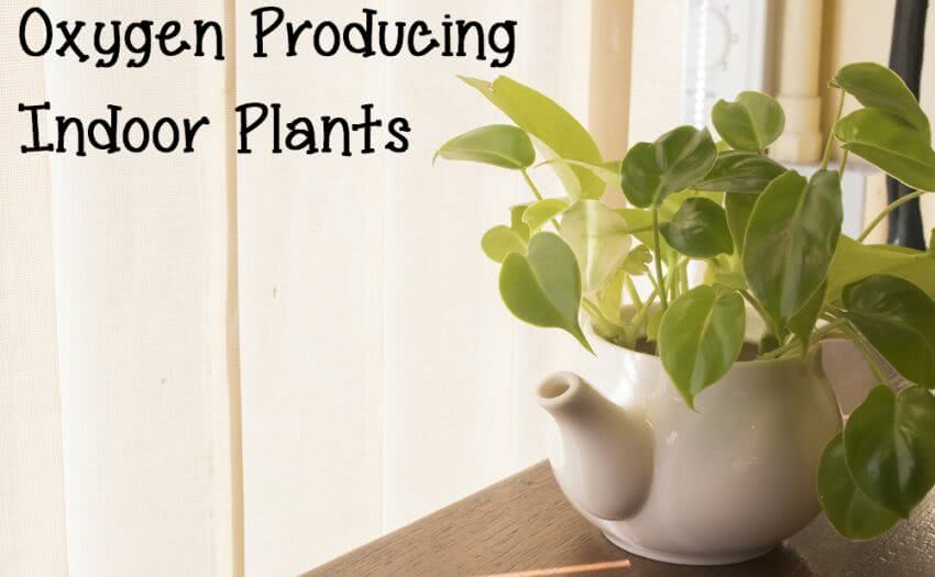 air purifier plants