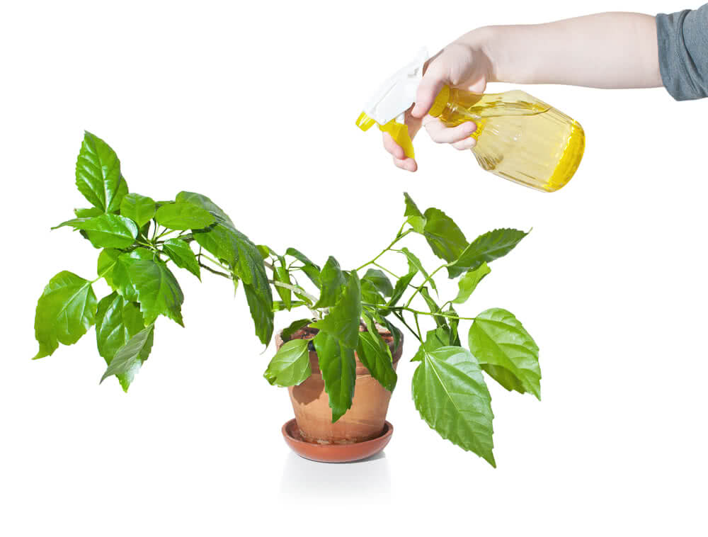 The Main Care of Indoor Plants in Winter