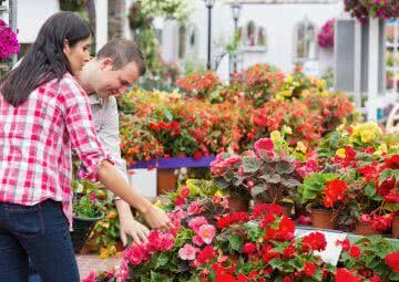 Buying nursery plants