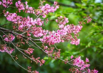beautiful trees with flowers