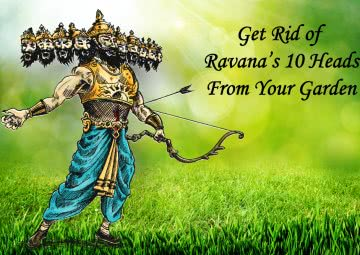 Dussehra: Getting rid of Garden Ravanas