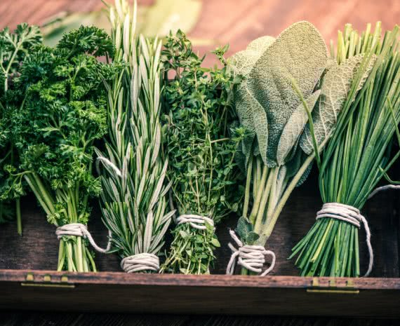 herbs to cure wounds and strengthen immune system