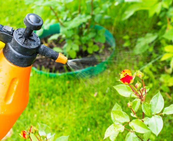 non chemical methods of pest control