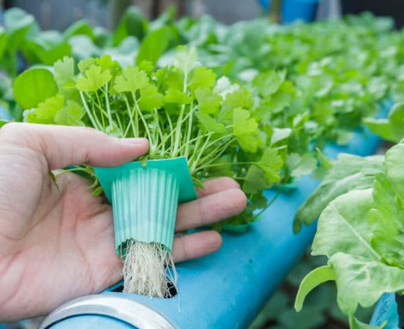 how to build hydroponic system