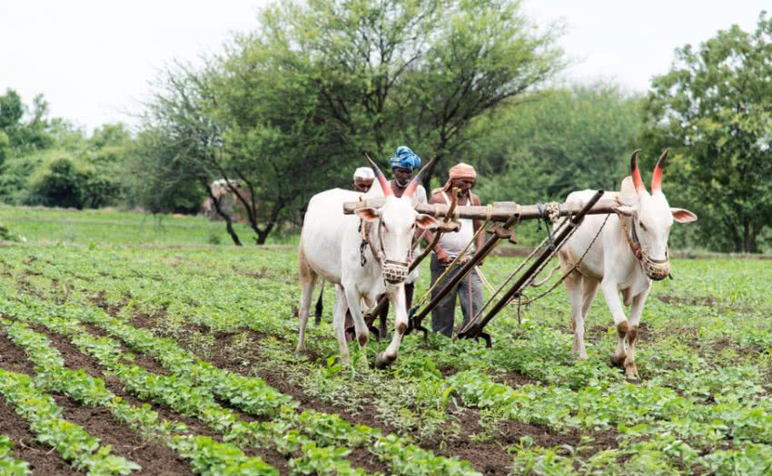 agriculture in india