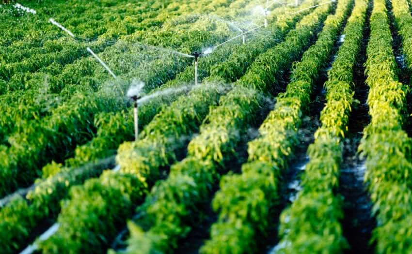 sources of irrigation in india
