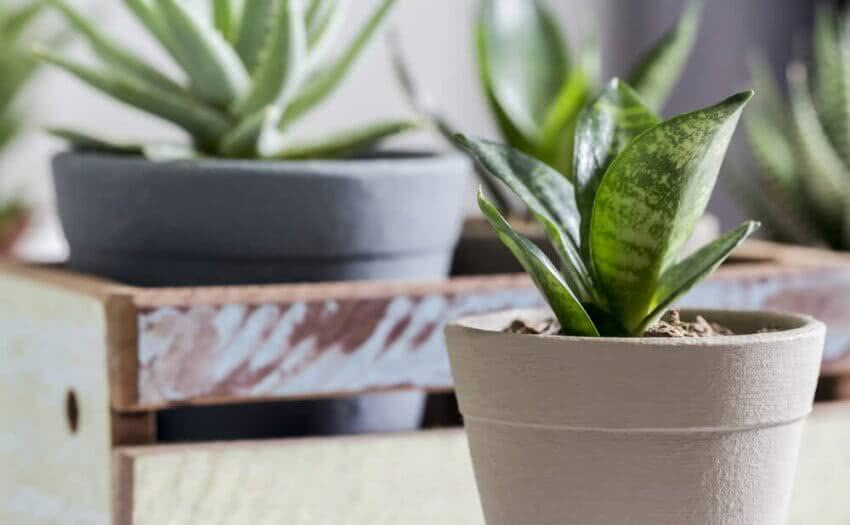 best indoor plants for clean air