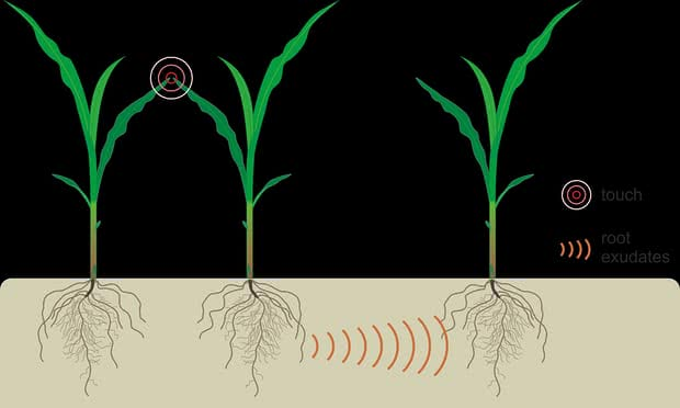 plant communication