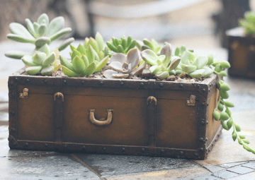 Old suitcase succulent planter