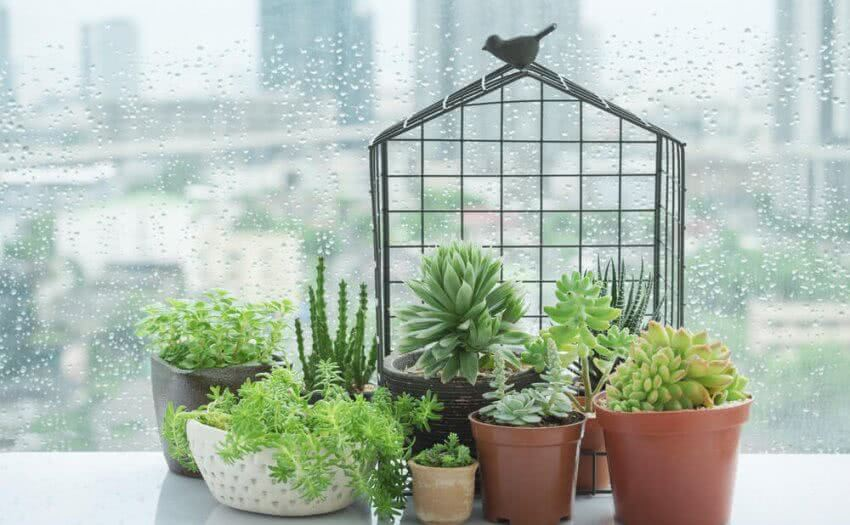 succulent plants for windowsill