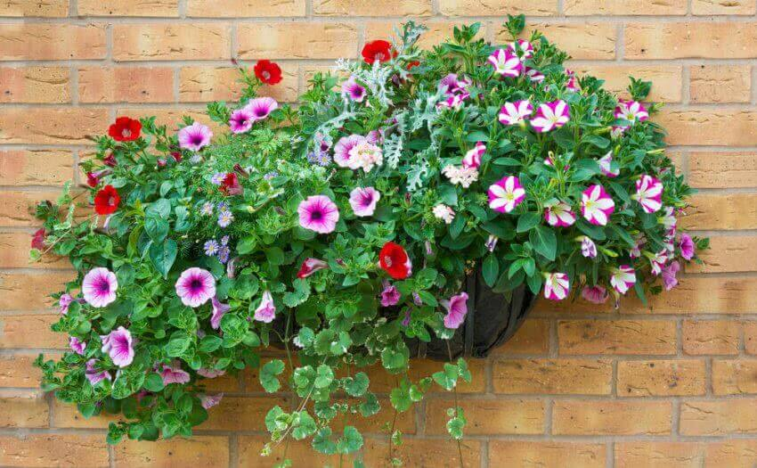 wall pot or hanging half basket
