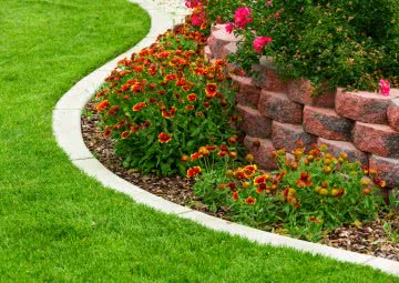 edge plants or border plants for garden