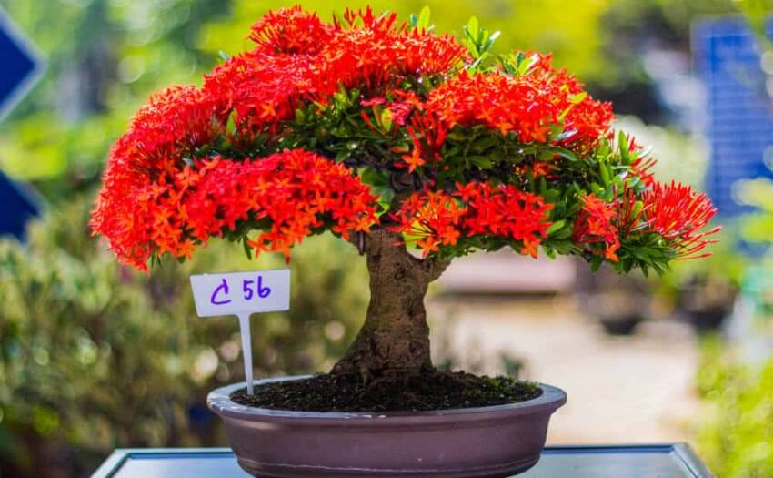 How to grow a new bonsai plant