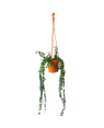 Millionaire Heart Green Plant with Orange Color Hanging Pot