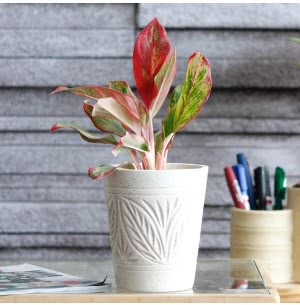 Matte Finish White Ceramic Pot With Leaf Groove Pattern- 4.5 Inch