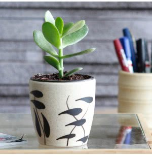 Damru Matte Finish Ceramic Pot (3.6 Inch Diameter)