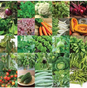 Vegetable Seeds Bank For Home Garden 25 Varieties - 1320 Seeds