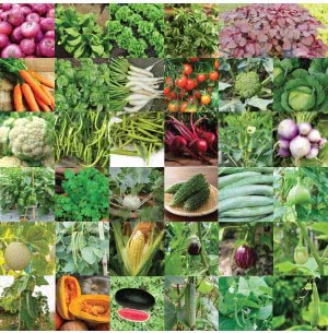 Vegetable Seeds Bank For Home Garden 35 Varieties -1675 Seeds