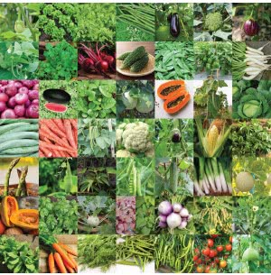 Vegetable Seeds Bank For Home Garden 50 Varieties - 2255 Seeds