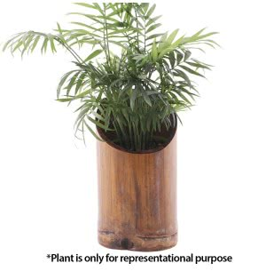Bamboo Desktop Planter - Yellow Tinch