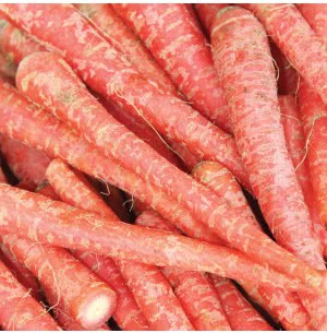 Desi Carrot Vegetable (Long) Seeds