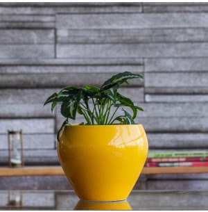 Apple Yellow Ceramic Pot- 6.6 Inch