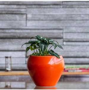 Apple Orange Ceramic Pot- 6.6 Inch