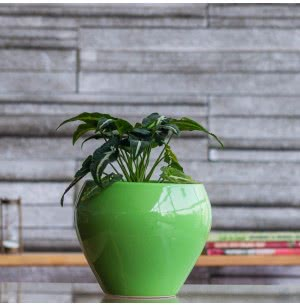 Apple Ceramic Pot (6.6 Inch Diameter)