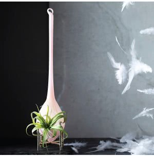 Elegance Glass Planter With Hardy Tillandsia Air Plant
