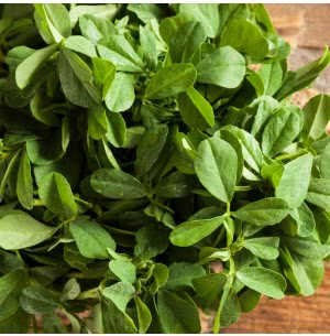 Fenugreek Vegetable Seeds (Methi)