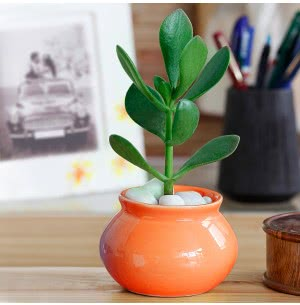 Handi Orange Ceramic Pot- 3 Inch