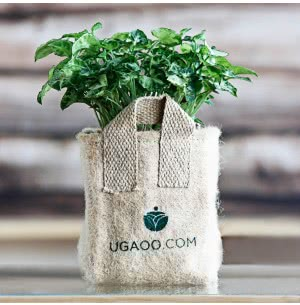 Jute Grow Bags Small (6 in x 7 in)