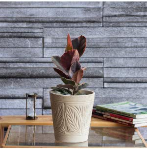 Matte Finish Ceramic Pot With Leaf Groove Pattern - 5.7 Inch