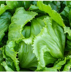Lettuce Iceberg Vegetable Seeds (Round)