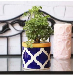 Pipe Ceramic Pot (3.8 Inch Diameter)