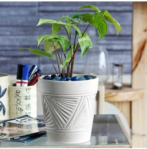 Matte Finish White Ceramic Pot With Pyramid Groove Pattern- 5.7 Inch