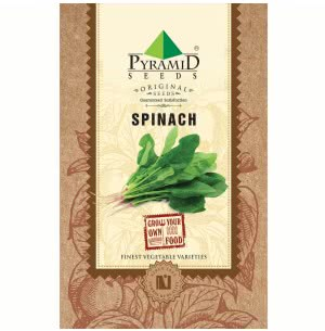 Spinach Seeds (Palak) - 100g