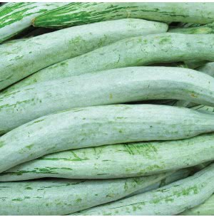 Snakegourd Vegetable Seeds