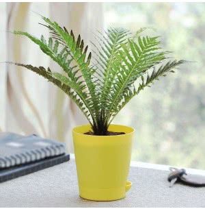 Tree Fern Plant With Self Watering Pot
