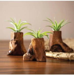 Tree Of Life Wooden Planter With Tillandsia Air Plant