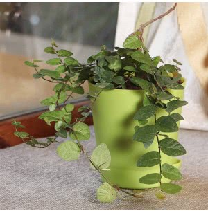 Indian Ivy (Waghnakhi) Plant with Self Watering Pot