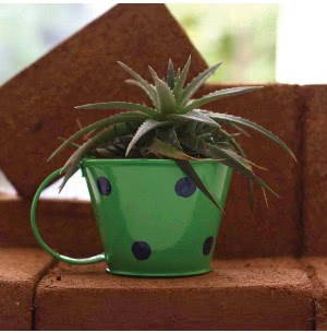 Green Girgit Polka Cups (Green)