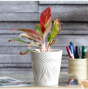 Matte Finish White Ceramic Pot With Pyramid Groove Pattern- 4.5 Inch