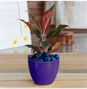 Apple Ceramic Pot (3.8 Inch Diameter)