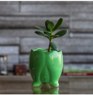Tusker Ceramic Pot- 4 Inch