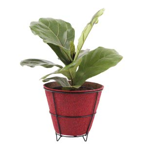 Coir Pots Multicolor 8 in. With Metallic Stand - Set of 5