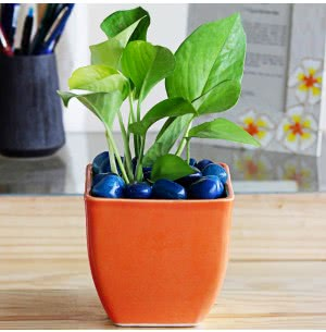 Contemporary Ceramic Pot- 4.5 Inch